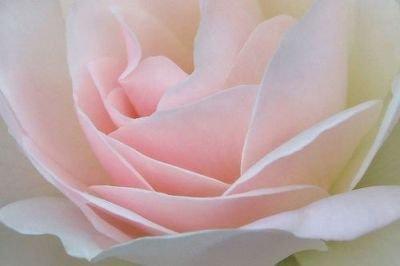 rose.douceur