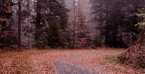 chemin-d-automne2