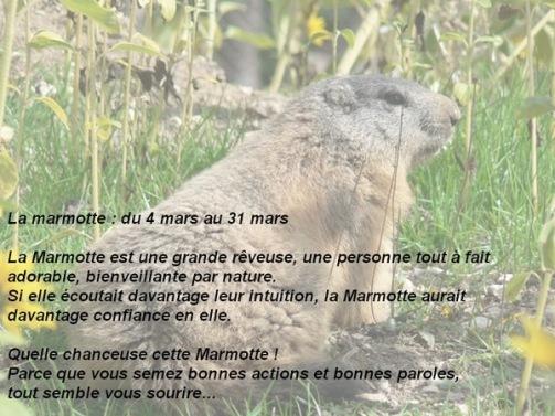 03 marmotte