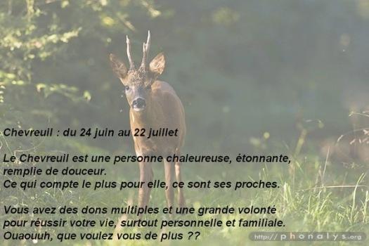 07 chevreuil