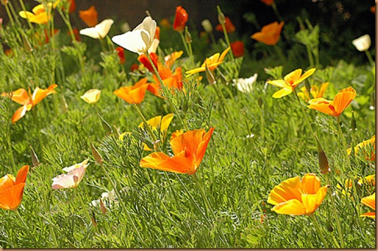 Printemps-flower