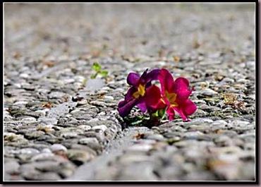 fleur_desert