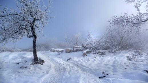 bel-hiver.74711
